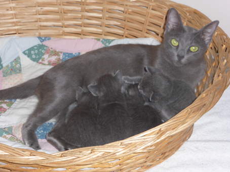 Pookie-2nd-litter-babies-feeding