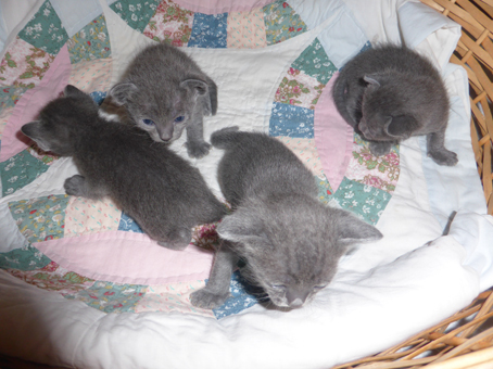 Pookie-2nd-litter-babies-on-move