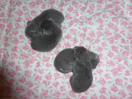 Pookie-2nd-litter-newborns