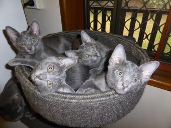 Pookies-kittens-a-bit-older