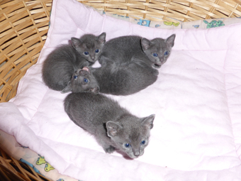 Pookies-kittens-a-few-weeks-old