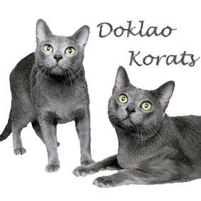 Doklao-banner